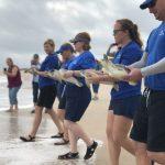 SeaWorld Rescue devolve 15 tartarugas reabilitadas ao oceano Atlântico